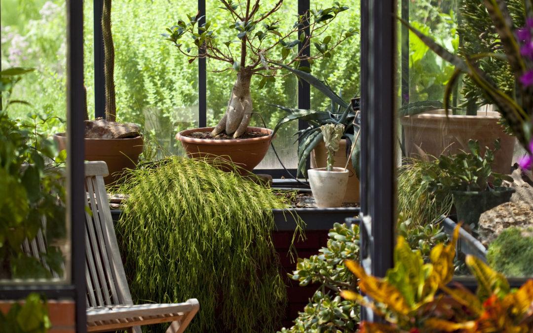 Crer Un Jardin DHiver Dans Sa Vranda Ides Et Conseils  Lux