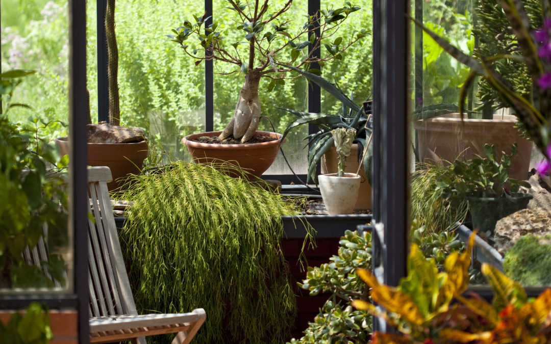 cr er un jardin d hiver dans sa v randa id es et conseils lux zenithal. Black Bedroom Furniture Sets. Home Design Ideas